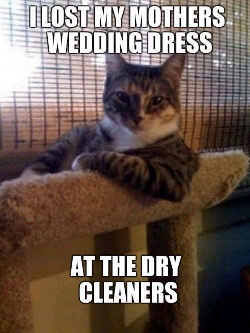 cat-secrets-dry-cleaners