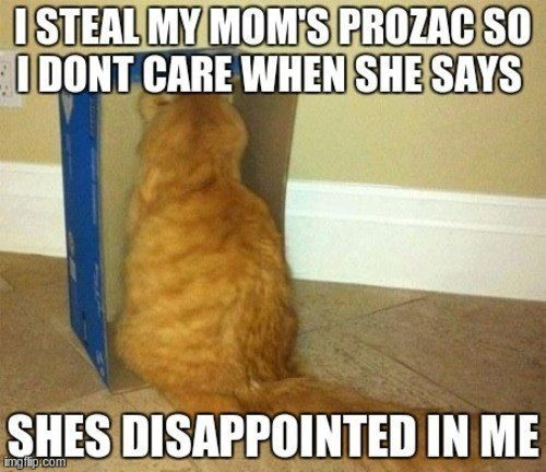 cat-secrets-steal-prozac