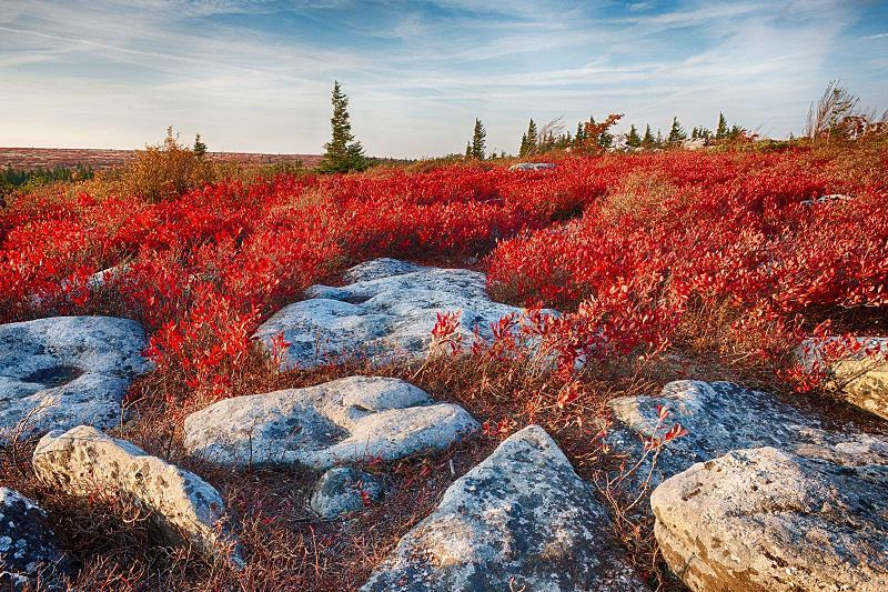 colorful-fall-photos-autumn-ground-cover