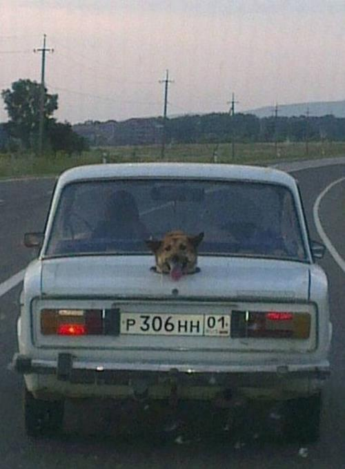 Dog Transport