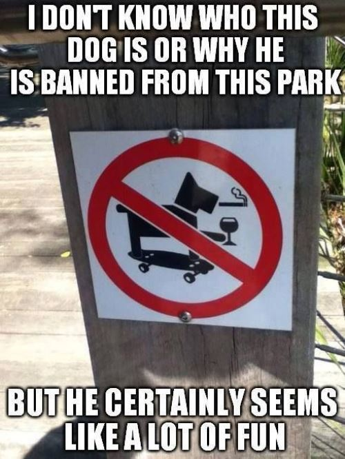 Funny Signs Epic Dog