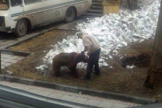 Pet Bears