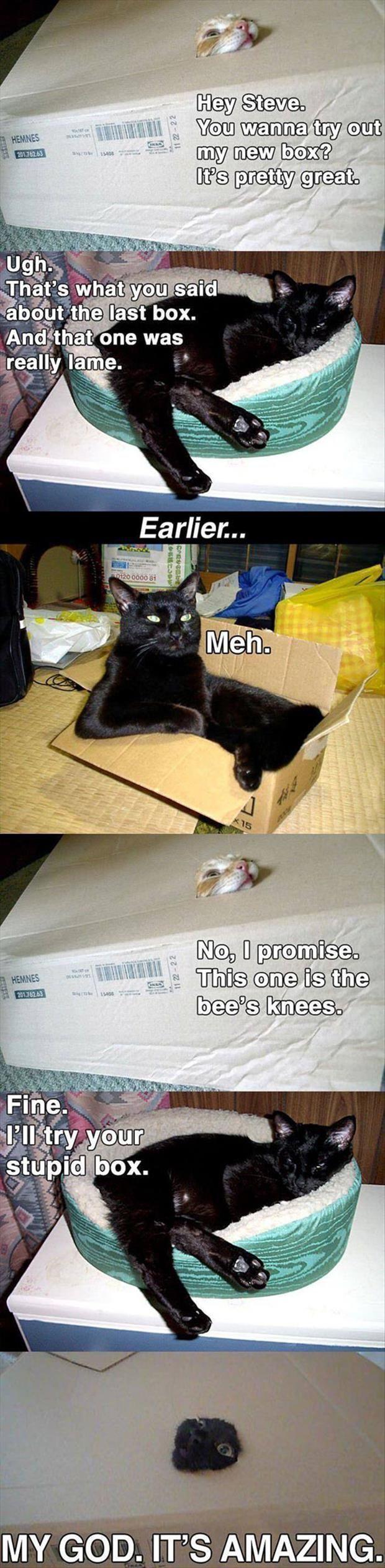 Cat Tries Box