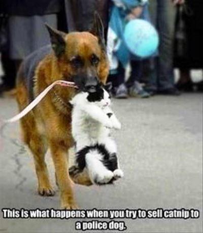 Catnip To A Police Dog