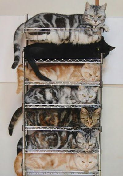 Funniest Pinterest Pictures Cat Organizer