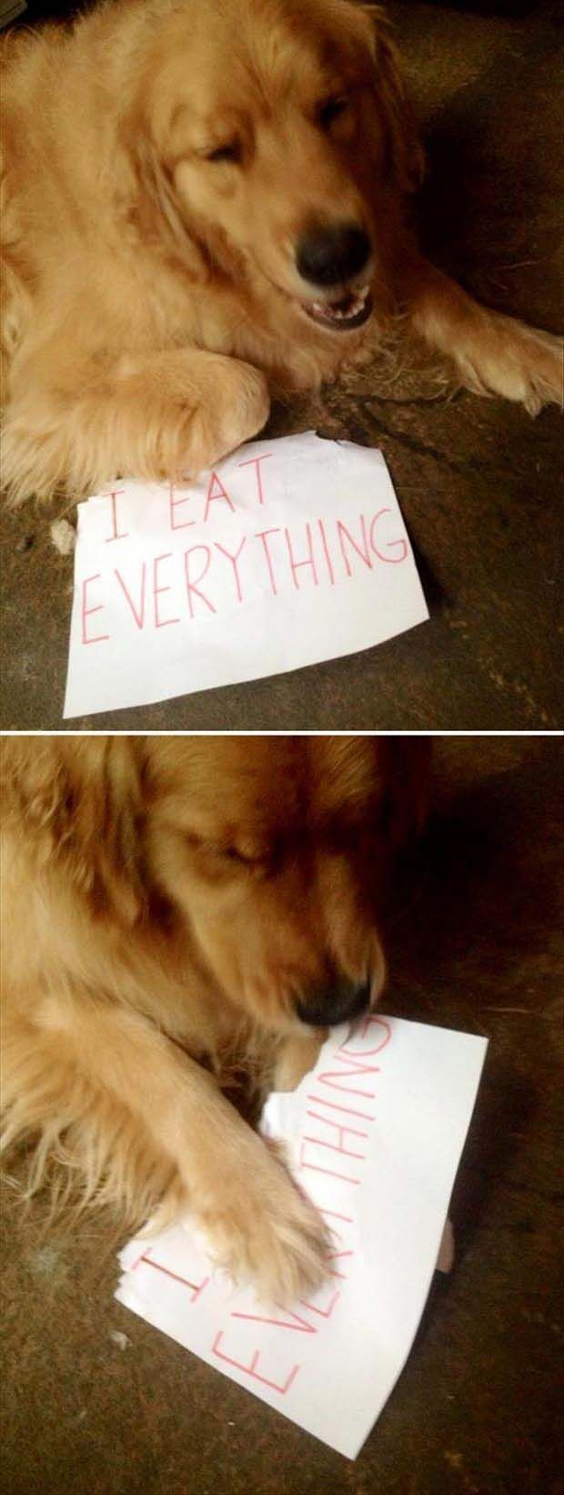 I Eat Everything