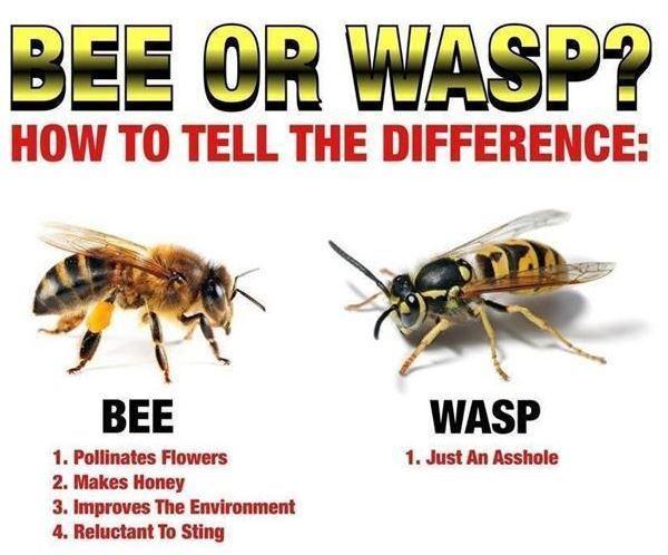 Pinterest Pictures Bees Versus Wasps