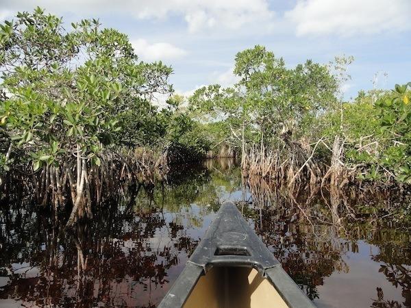 scenic-spots-everglade-national-park