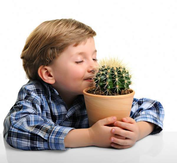 Fresh Cactus