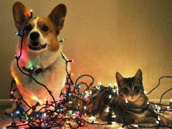 Funny Christmas Photos Pets