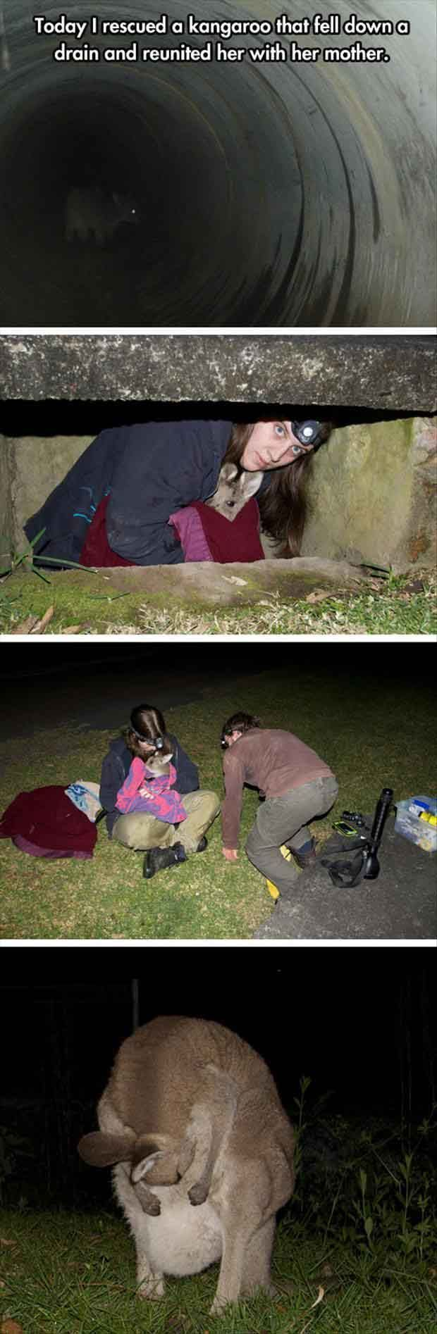 Kangaroo Rescue