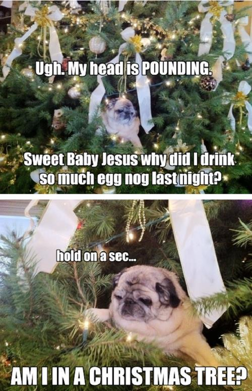 Pug In A Christmas Tree
