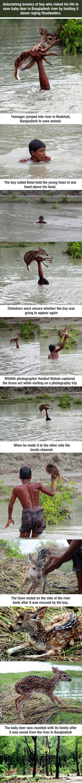 Rescued Deer