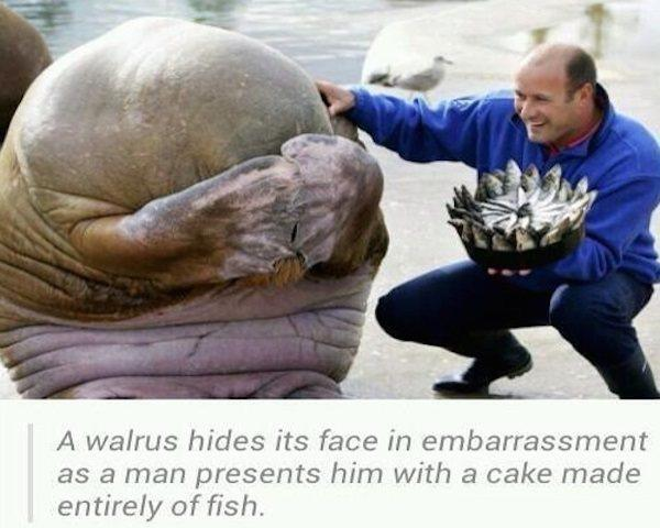 Walrus Present