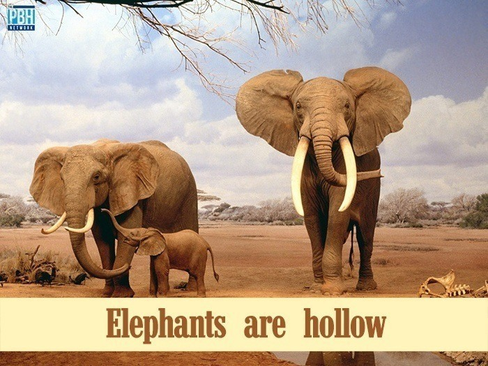 Elephants Are Hollow