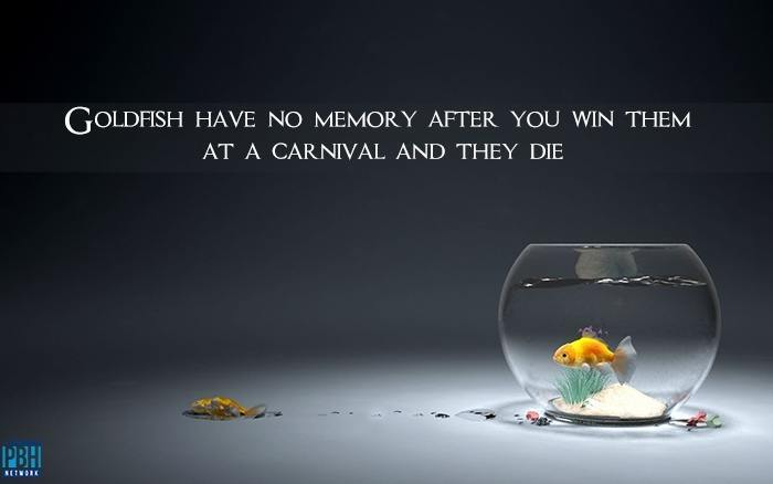 goldfish-have-no-memory-after-you-win-them-at-a-carnival-and-they-die