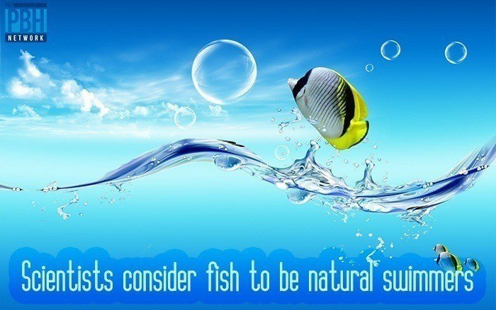 scientists-consider-fish-to-be-natural-swimmers
