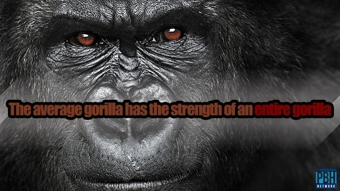 The Average Gorilla Has The Strength Of An Entire Gorilla