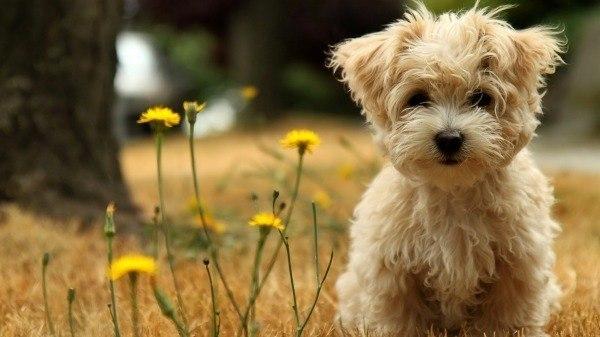 Banksy Puppy