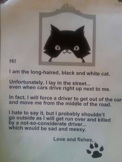 Cat Sarcasm