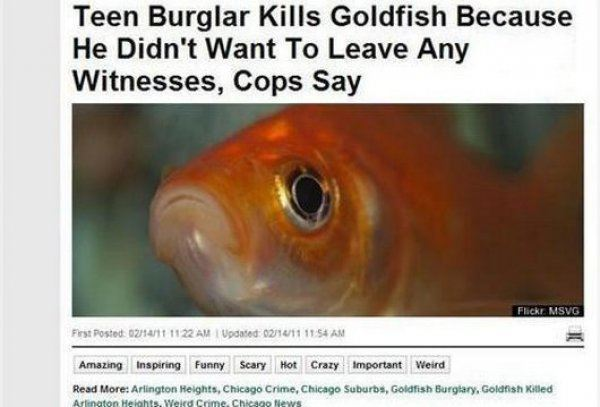 Funny Newspaper Headlines Goldfish