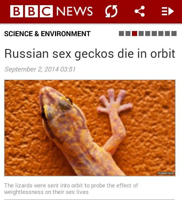Sex Geckos