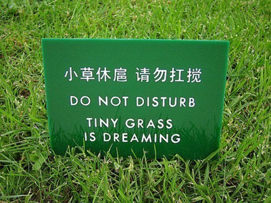 Lost In Translation Signs Grass Dreaming