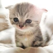 Gullible Kitty Cat