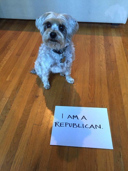 Republican Dog