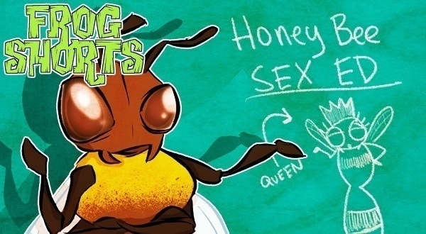 Bee Sex Featured