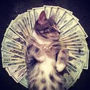 cat-rolling-in-money