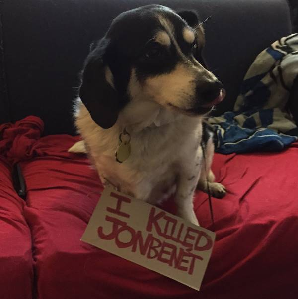 Dog Shaming Jon Benet