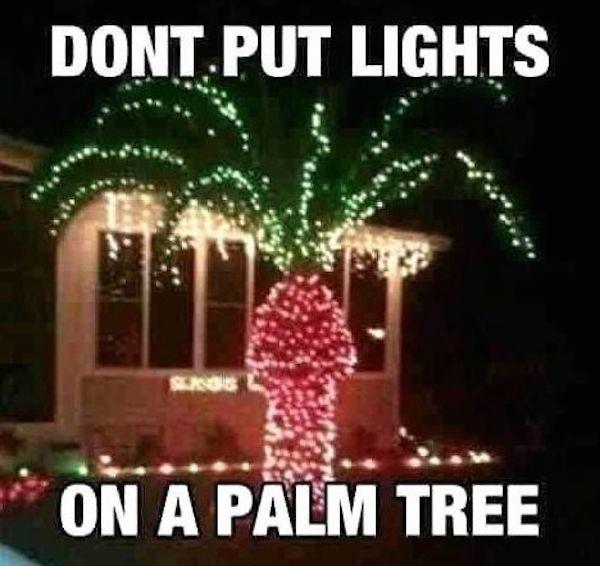 Palm Tree Penis