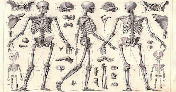skeleton-anatomy