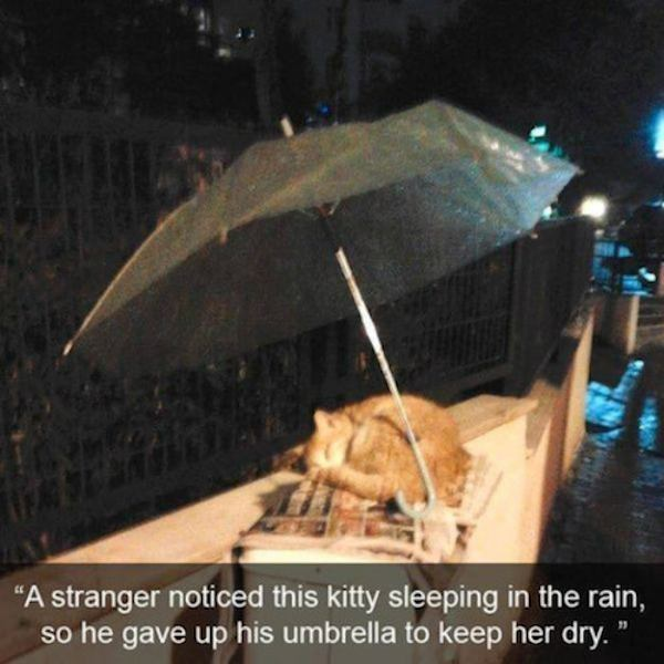 sleeping-kitty