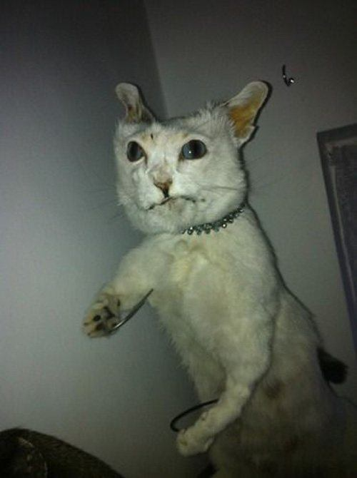 Action Cat Bad Taxidermy