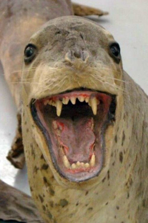 Attack Seal Bad Taxidermy