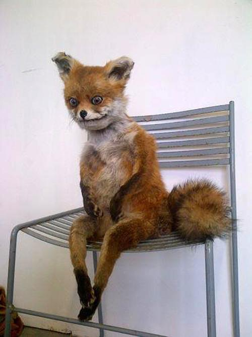 Caffeinated Fox