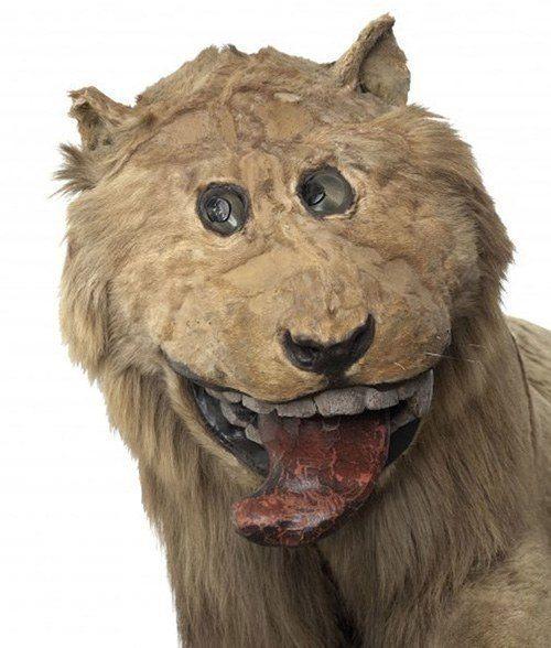 Cartoon Cougar