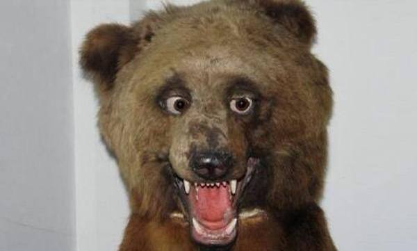 Drunk Bear Bad Taxidermy