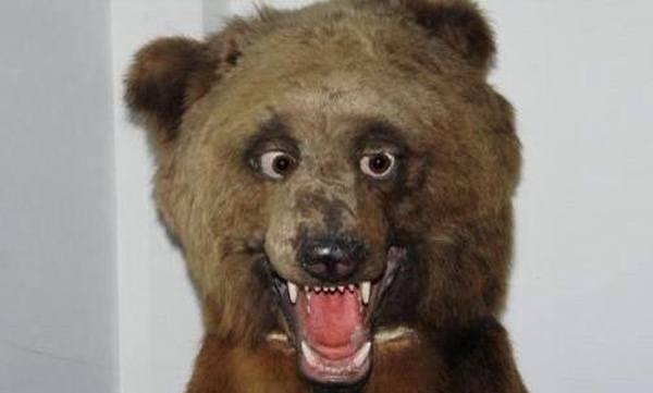 Drunk Bear Bad Taxidermy