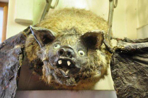 Garbage Bat