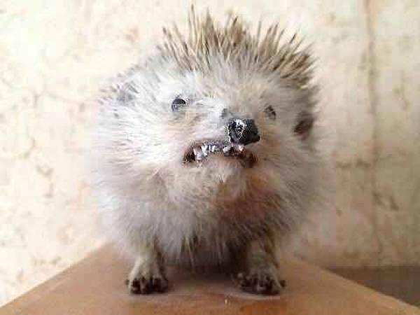 Nervous Porcupine