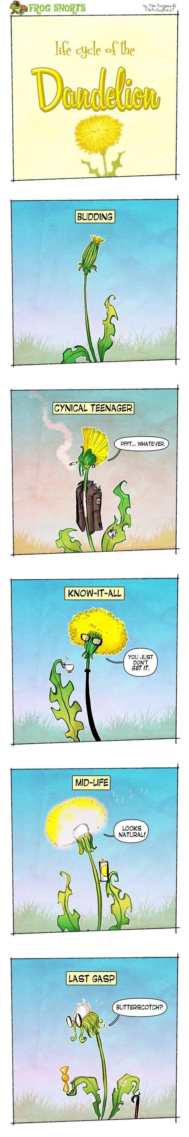 frog-shorts-dandelion