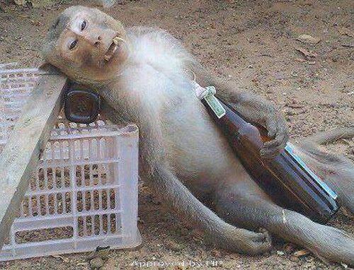 Funny Drunk Monkey