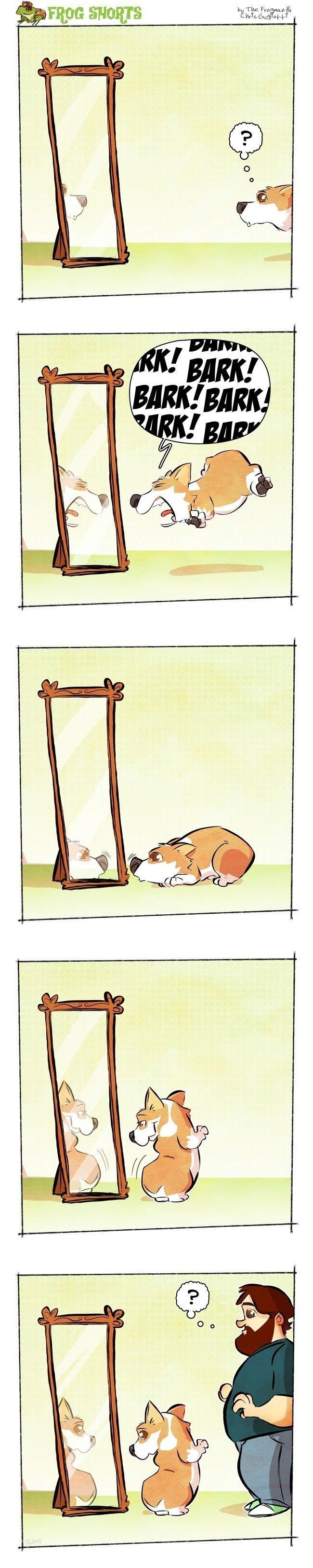 frog-shorts-dog-mirror