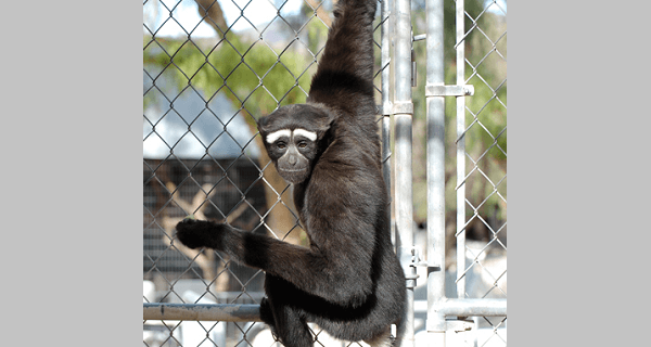 Fuckable Apes