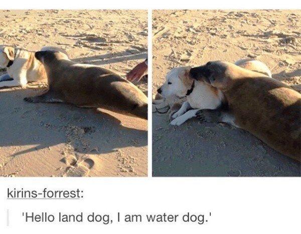 Land Dog