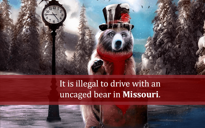 Drive Uncaged Bear