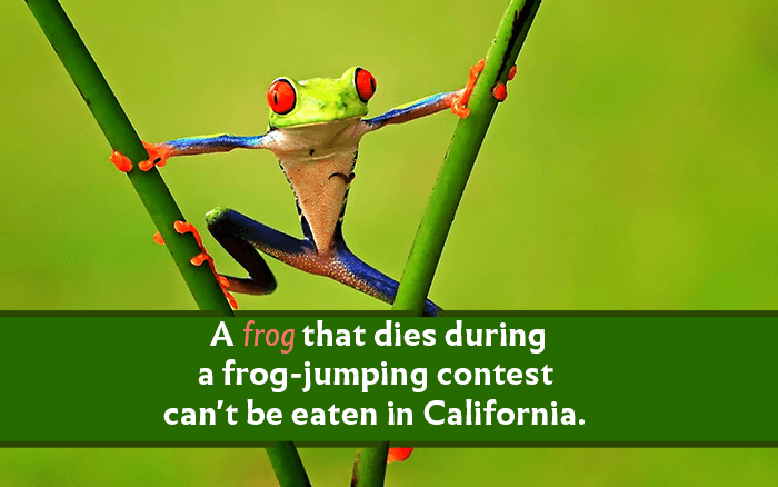 Frog Jumping Contests